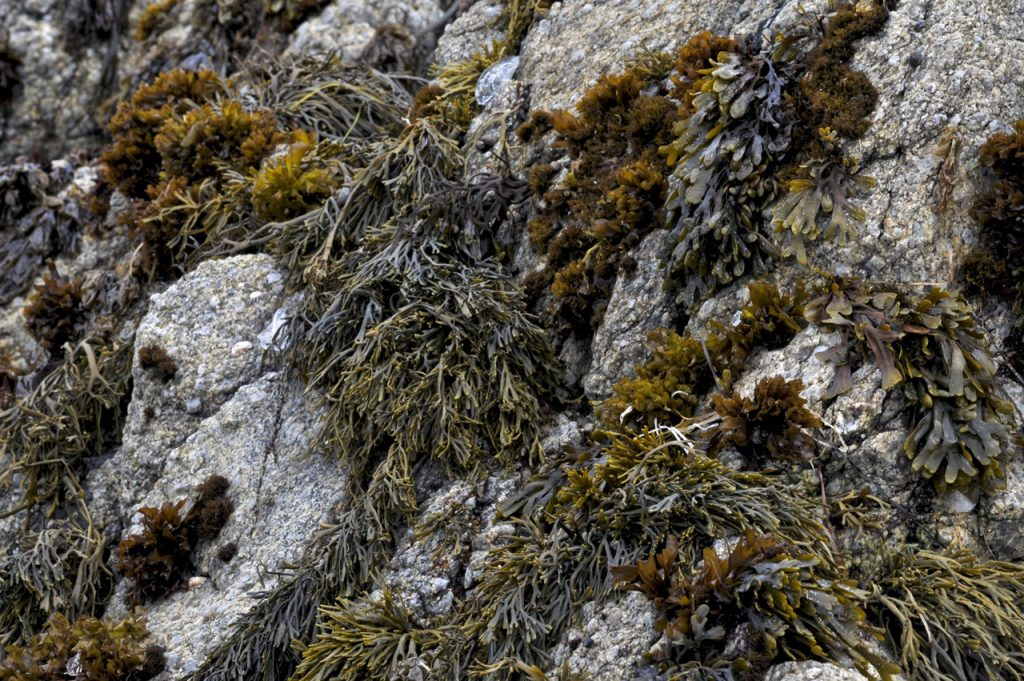 Different-Shades-of-Green-Seaweed
